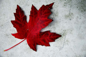 Maple Leaf Mold Removal Logo - Mold in your furnace system