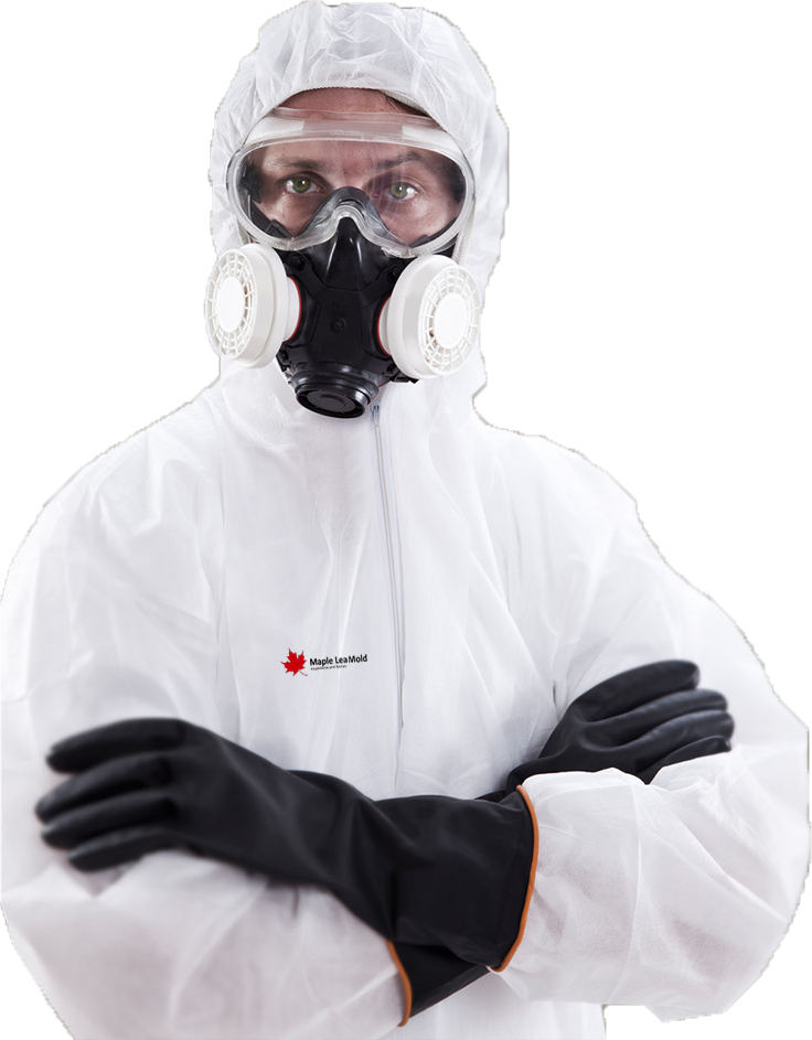 mold-removal-staff